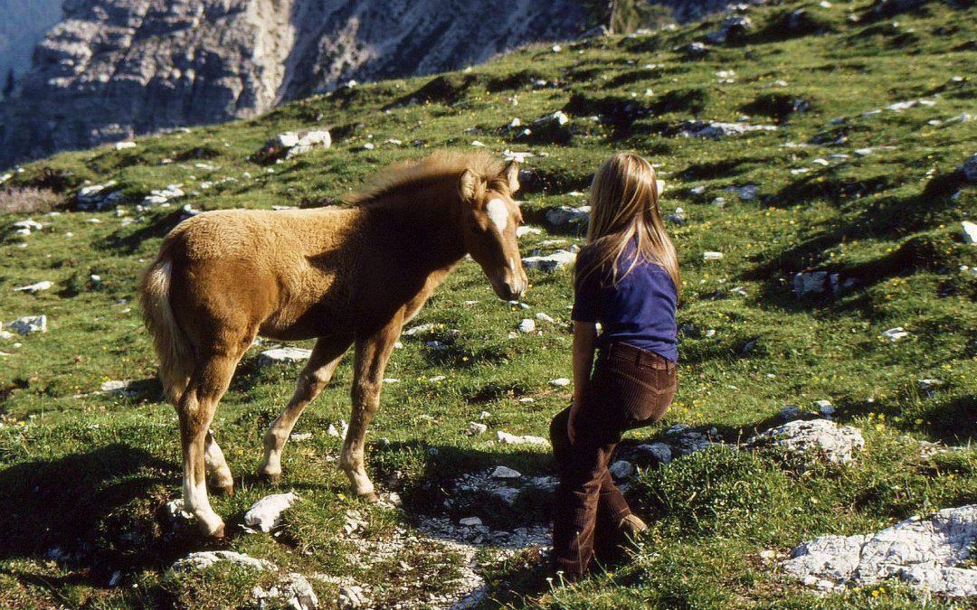 Vom Schulfotograf und den Pferden