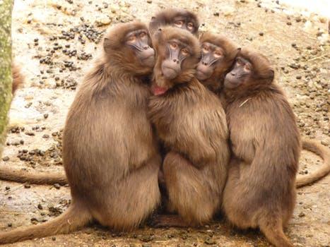 Die Affenfamilie